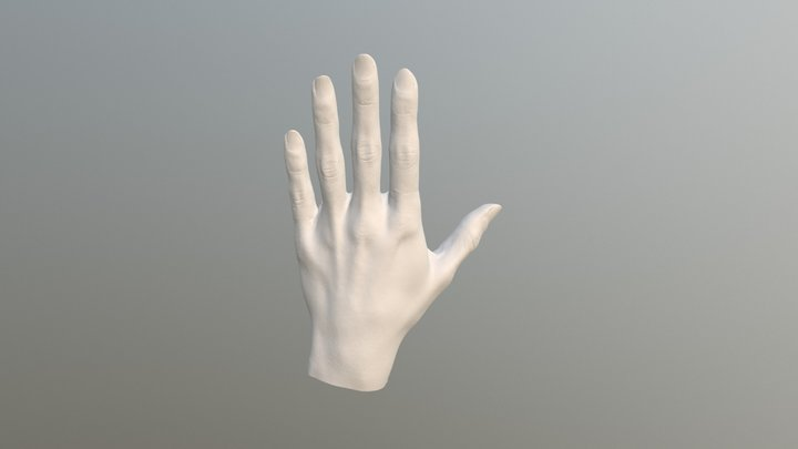 Original 3D Scan of Hand 3D Model