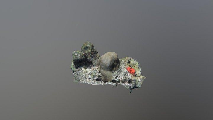 Goniastrea spp. GA276 3D Model