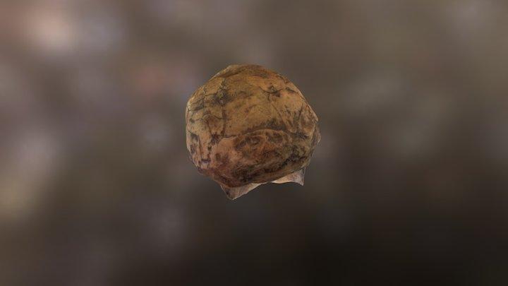 Homo Ergaster 3D Model