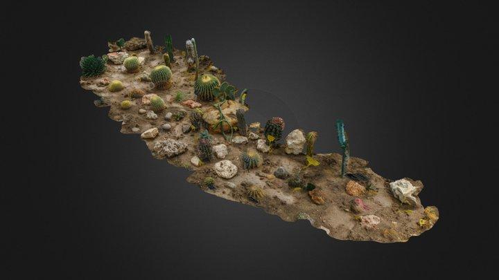 Cactus landscape 3D Model
