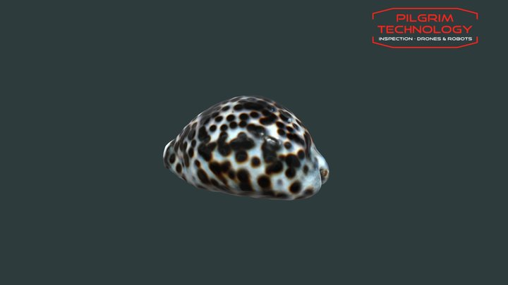 Coquillage 3D Model