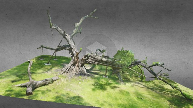 Collapsed Banyan Tree (no leaf) of NCKU 3D Model