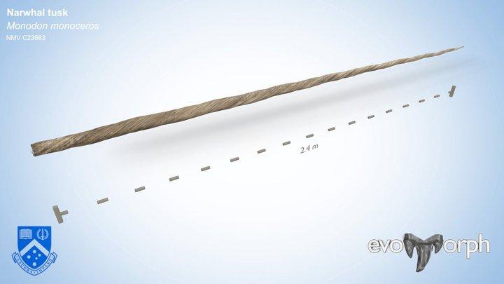 Narwhal tusk (Monodon monoceros) 3D Model