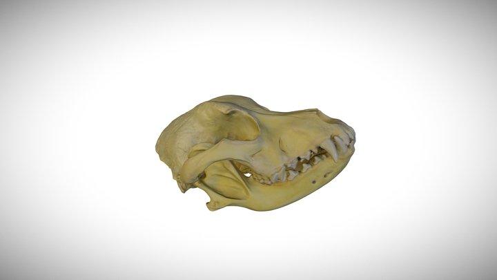 Dog (Pit bull) / CAS:MAM:26741 3D Model
