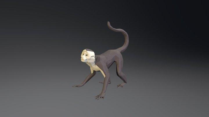 Mono Carablanca (Cebus capucinus) 3D Model