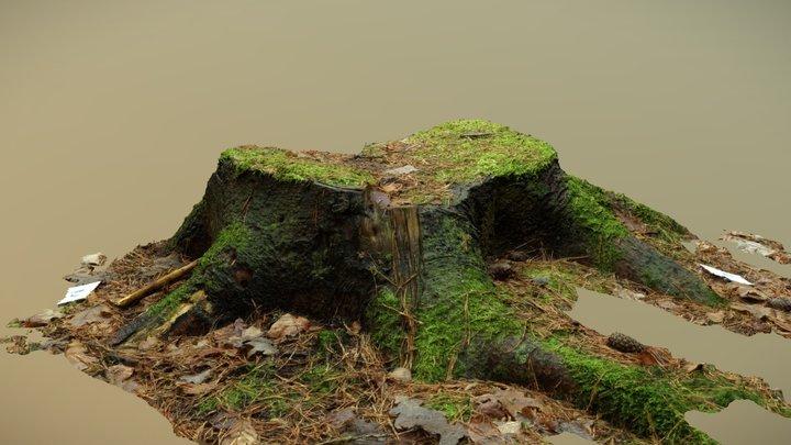 Tree Stump - Photogrammetry 3D Model