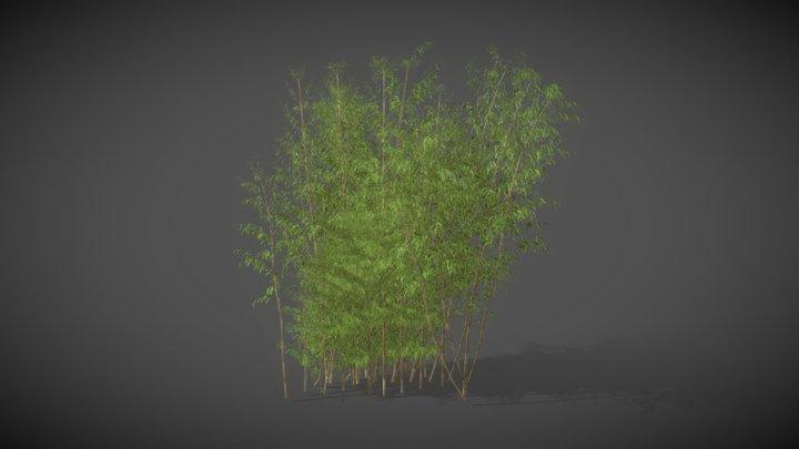 AS01 Bambusa (Golden Bamboo) 3D Model