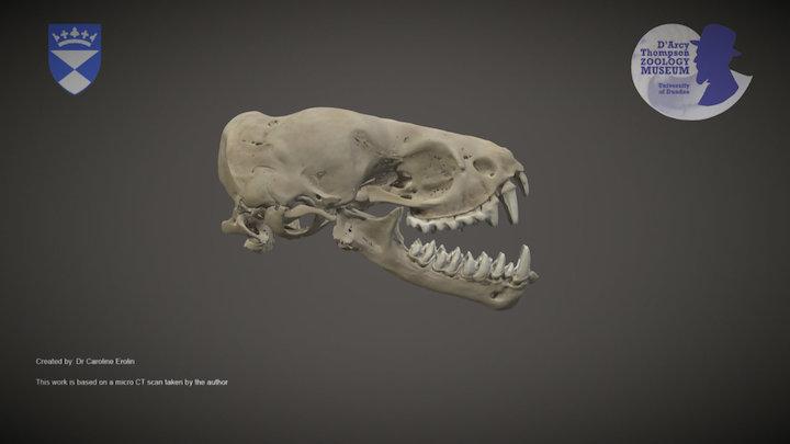 Bat skull 3D Model