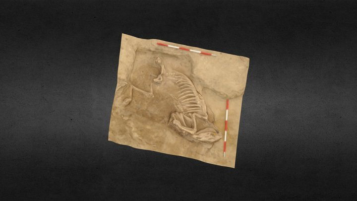 Mare - archaeological research Rusovce 3D Model