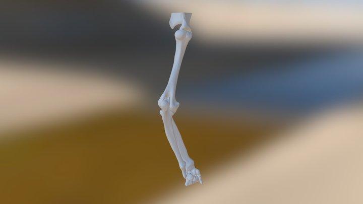 Ken Bruecker Front Leg Left (repaired) 3D Model