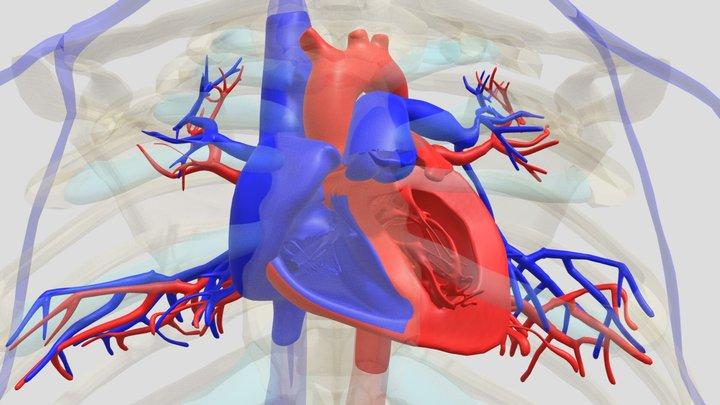 Hart 3D Model