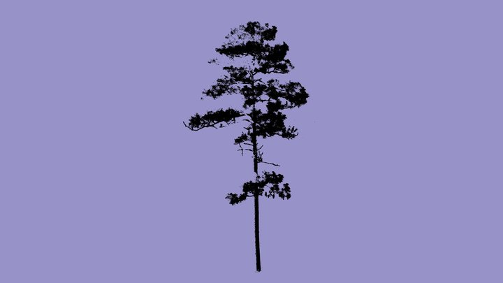 Wade Tree 18 - Cloud 3D Model