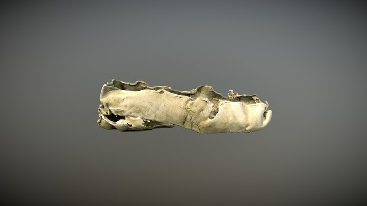 3300 year old bronze age shoe. 3D Model