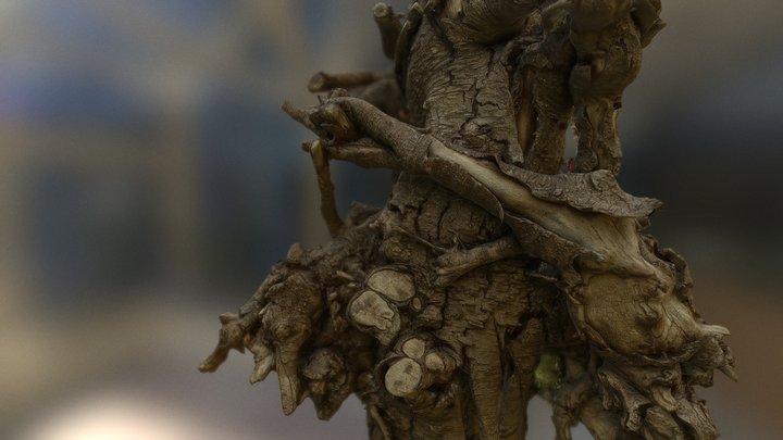 The log, twisted log 3D Model