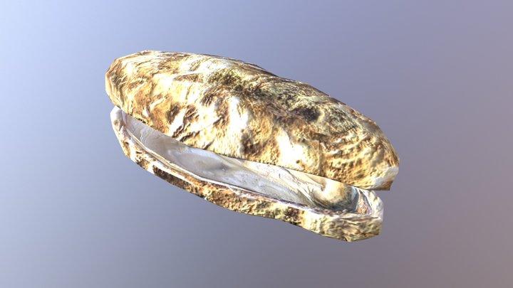Oyster 3D Model