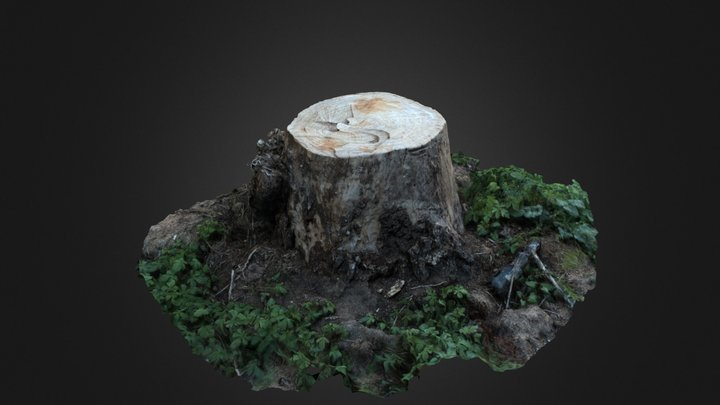 Scanned Cut Tree 3D Model