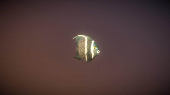 Pomacanthus paru 3D Model