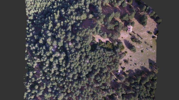 Bosc de pins afectat per processionària 3D Model