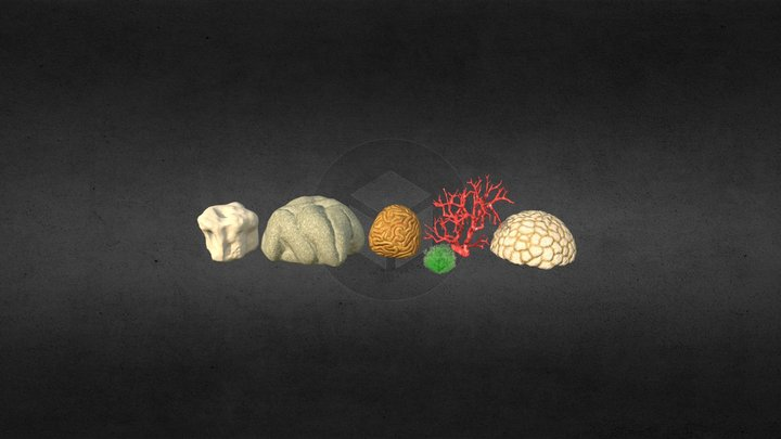 Sea Corals Package 3D Model
