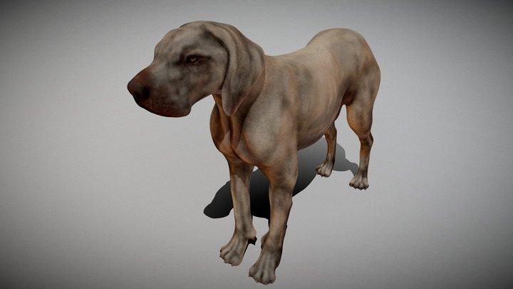Dog anatomy - Interactive on vakexpert.nl/dog 3D Model
