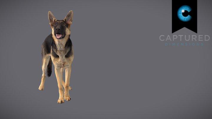 CD_GSD_Puppy_Scan 3D Model