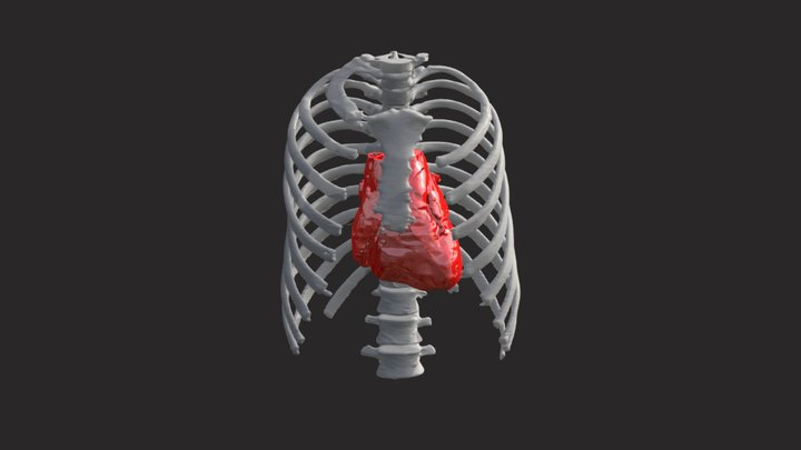 Heatmodel2x 3D Model