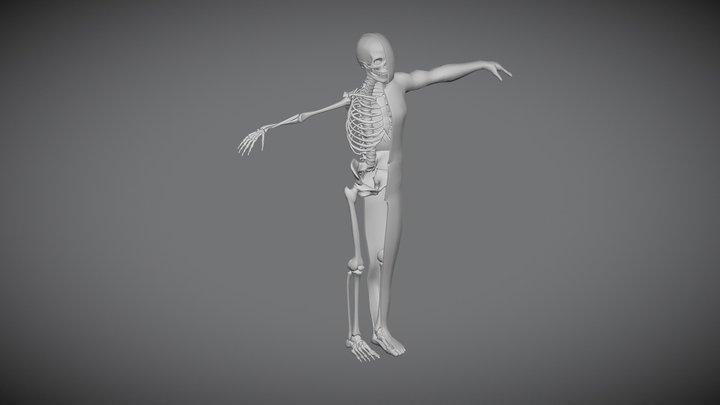 3D Human Skeleton 3D Model