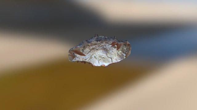 Oyster shell 3D Model