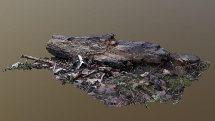 Rotten Bough/Zmurszały Konar 3D Model