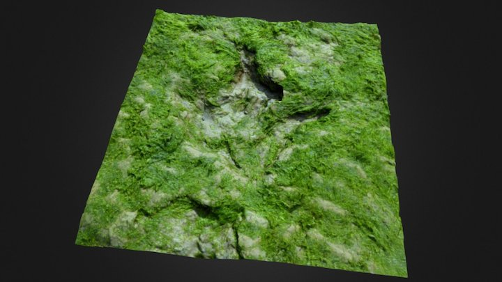 Dinosaur footprint 3D Model