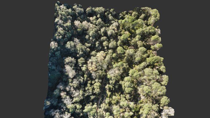Bosc de pins de Vallgorguina (part 2) 3D Model