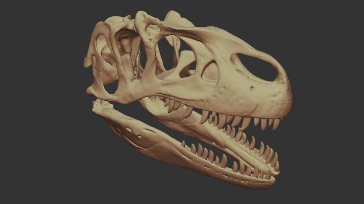 Allosaurus dinosaur skull 3D Model