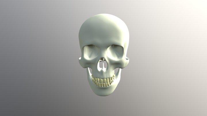 Skull poly reduction 3D Model