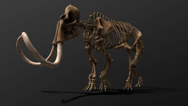 Mammuthus Primigenius Skeleton 3D Model
