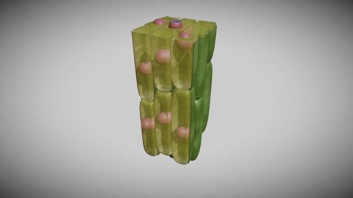 Meristem Cell Group 3D Model