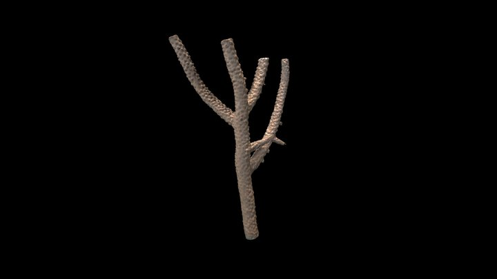X Acropora vaughani Wells, 1954 3D Model