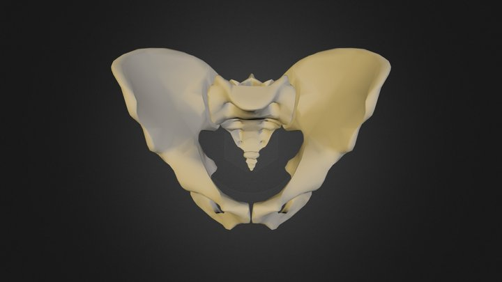 Pelvic bone (collection of thunthu) 3D Model