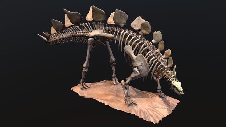 Stegosaurus 3D Model