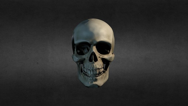 Skull Practice 3D Model