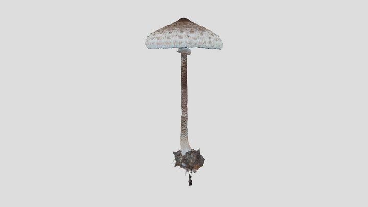Parasol mushroom WIP 3D Model