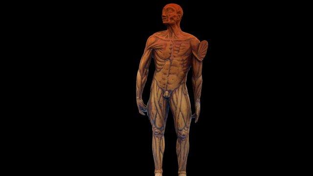 Cambridge UL Boxwood Medical Figure c1590 HiRes 3D Model