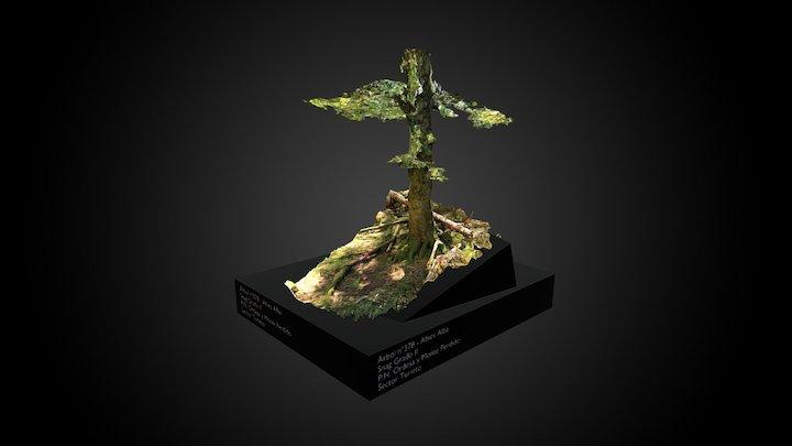 Árbol 378 - P.N. Ordesa y Monte Perdido 3D Model