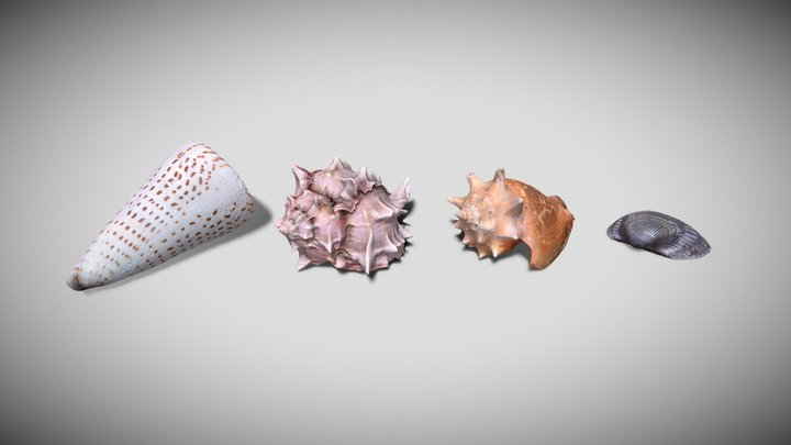 Photorealistic Seashells Collection -Scanned PBR 3D Model