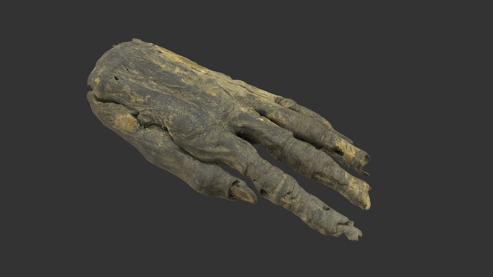 Scanned Bodypart - Ancient mummy male hand 3D Model