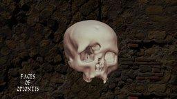 Oplontis B - Skull H 3D Model
