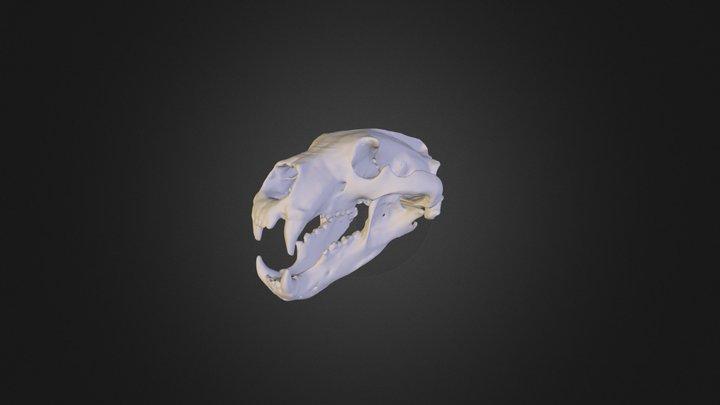 White Bear Skull 3D Model