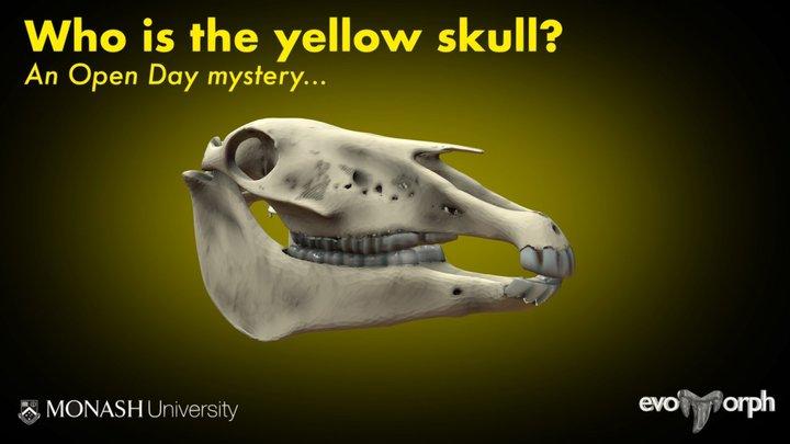 Monash Mystery Skull - Yellow 3D Model