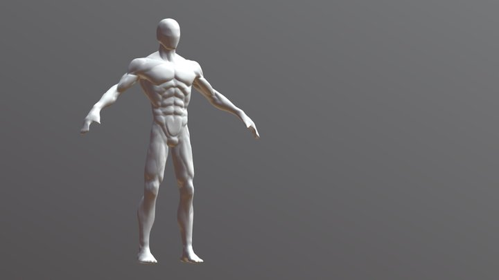Anatomy study Basemesh Human Male Body 3D Model