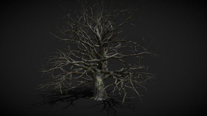 Old, mossy tree 3D Model