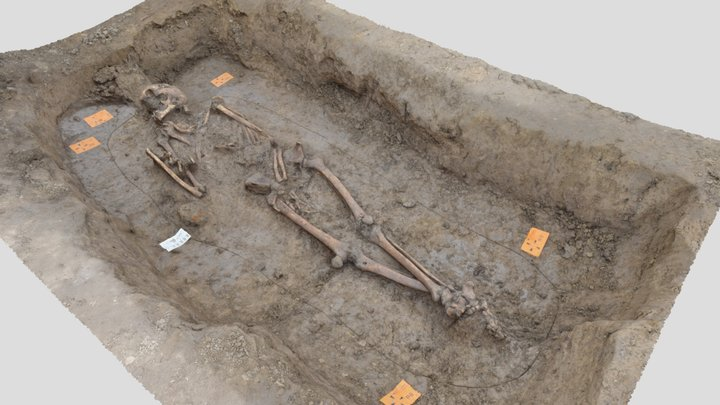 Skelet uit de vroege middeleeuwen 3D Model